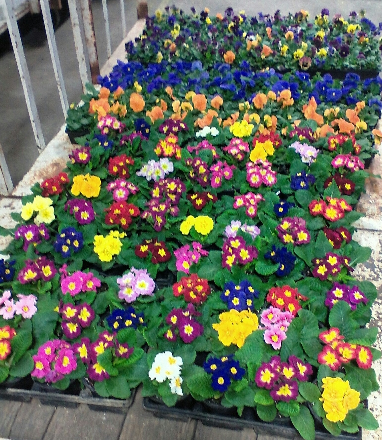 flower auctions in pa. wholesale flowers in pa  shippensburg, Beautiful flower